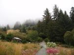 Humboldt Botanical Garden 2